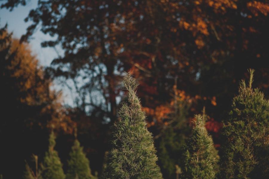 christmas-tree-farm-engagement-03